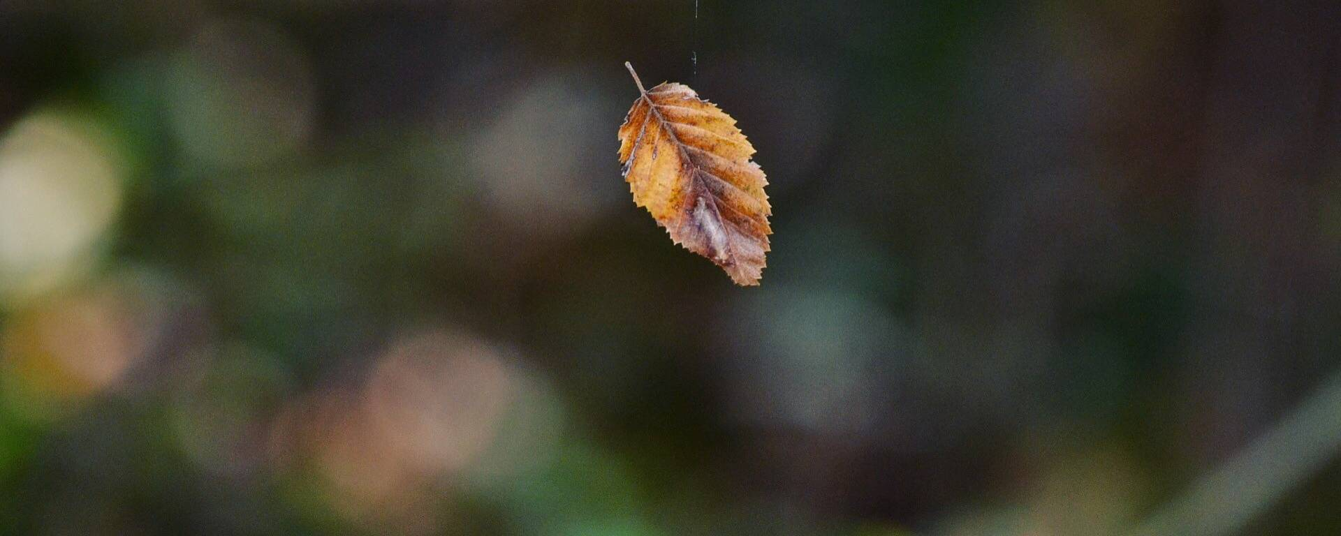 Journée nature dans le Gers