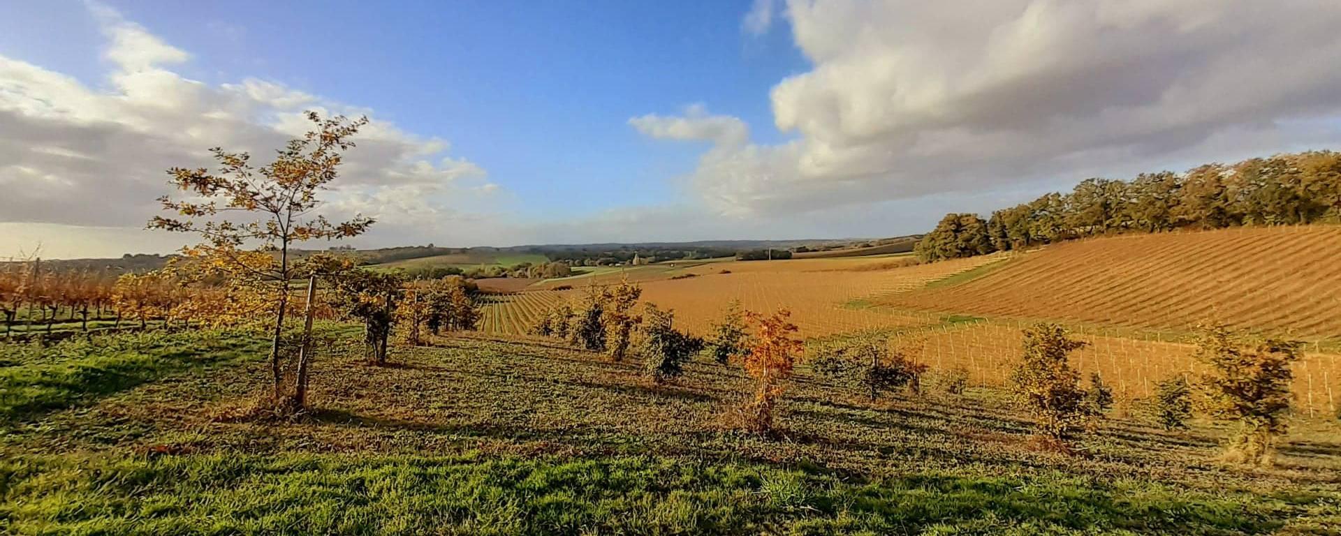 Vue sur les vignes de Lagardère, dans le Gers