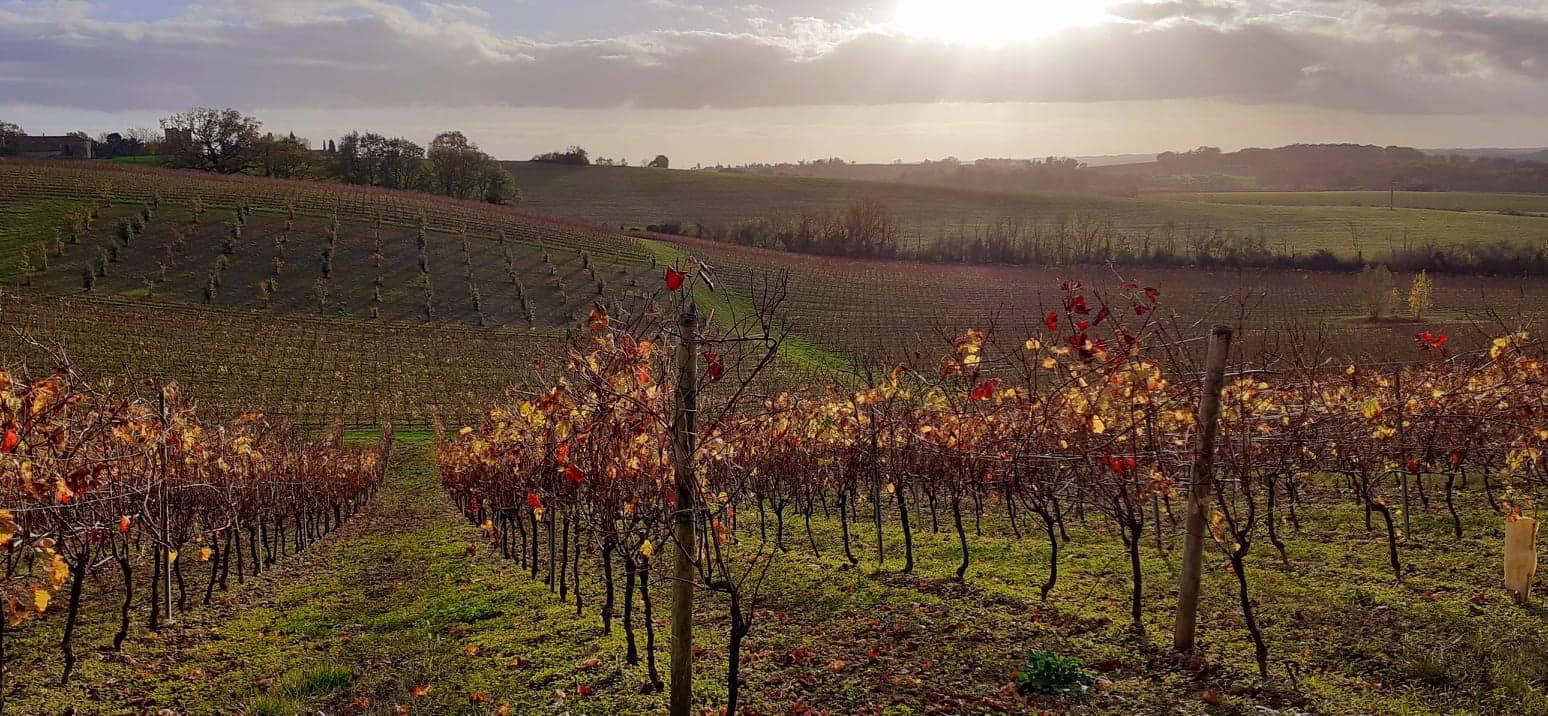 Le vignoble Armagnac-Gascogne