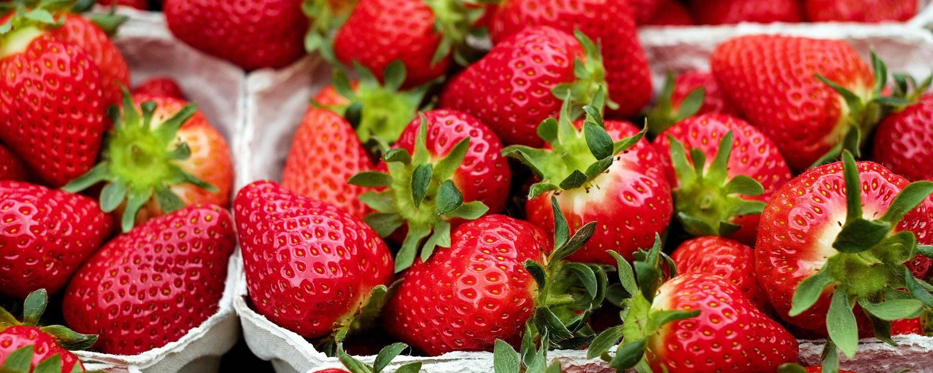 Vente de fraises en Ténarèze