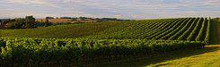 Vue sur les vignes de la Ténarèze